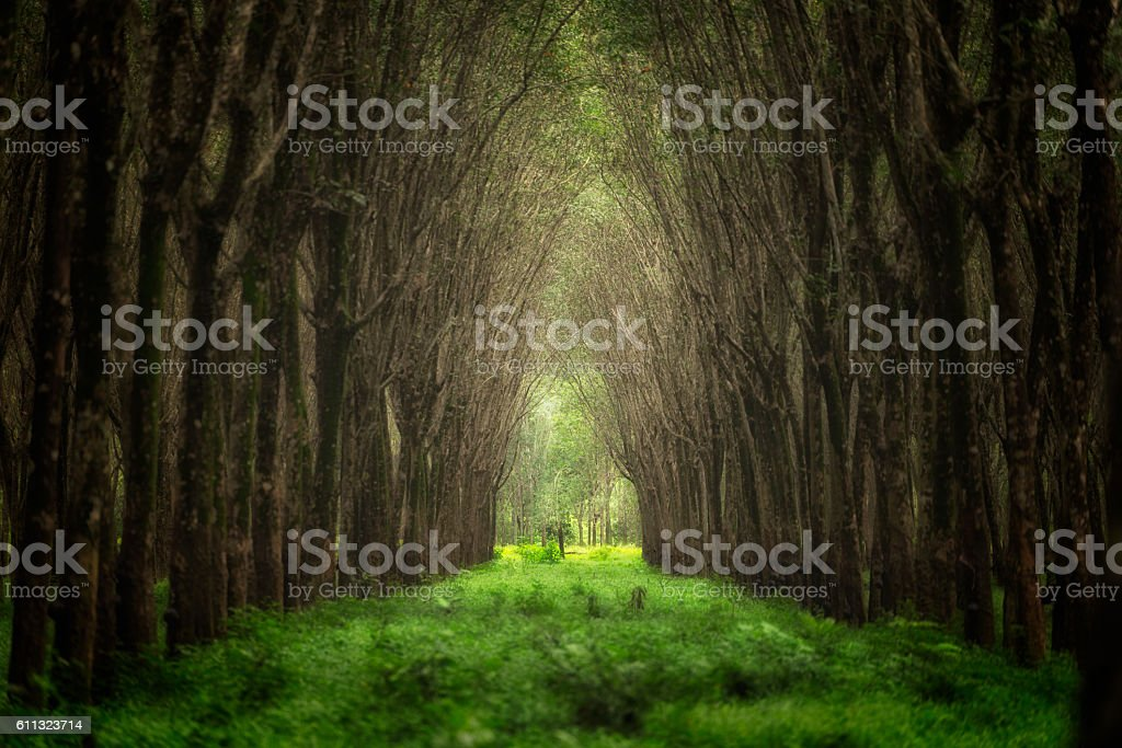 Blurry image of imaginary tree tunnel stock photo