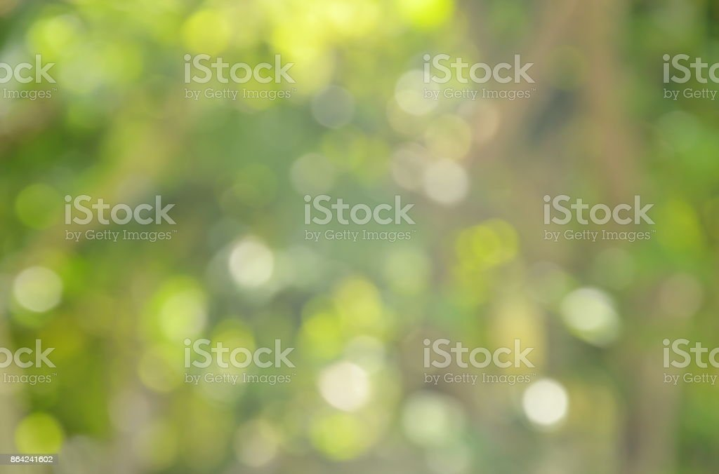 blurry light and plant in garden royalty-free stock photo