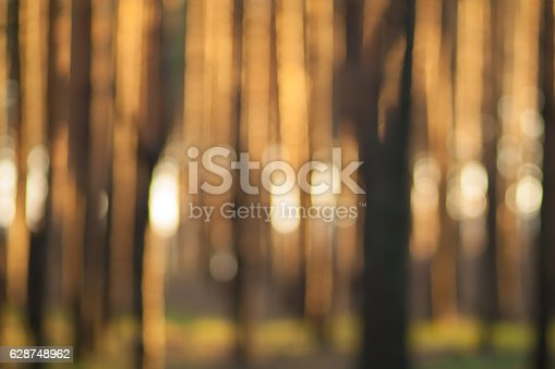 Forest bokeh background. Green defocused backdrop for your design.