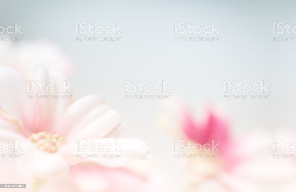 Blurry of flower with copy space for backgorund. stock photo