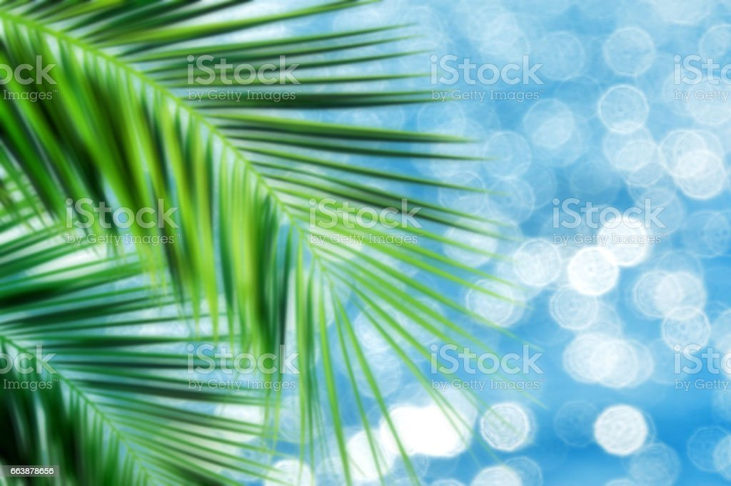 blurry palm tree and sea stock photo