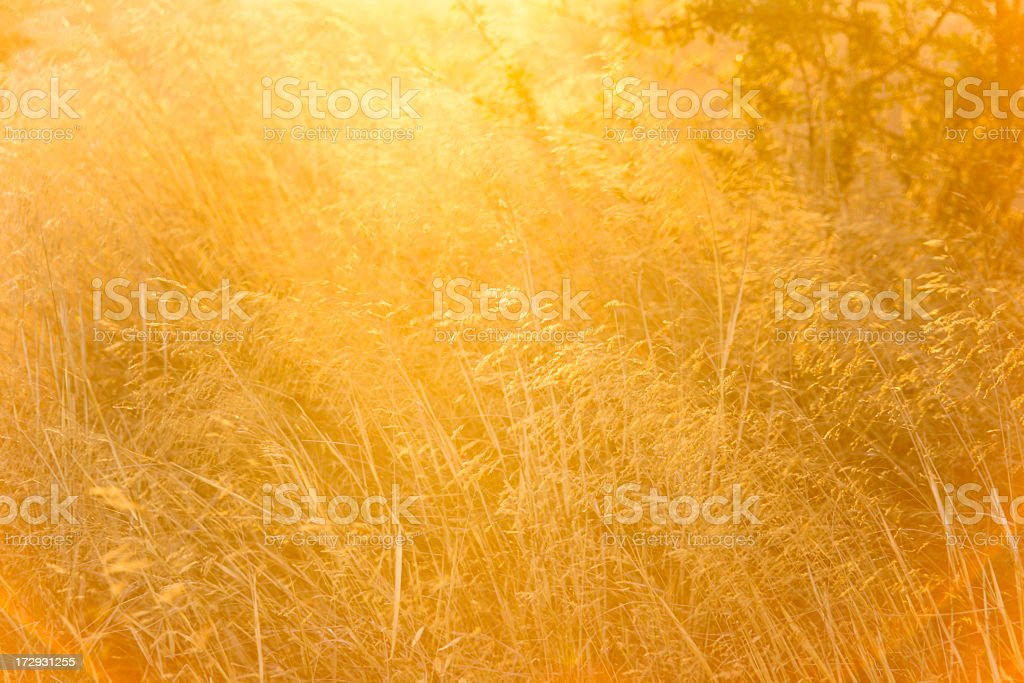 Blurry photo of a golden field of grass stock photo