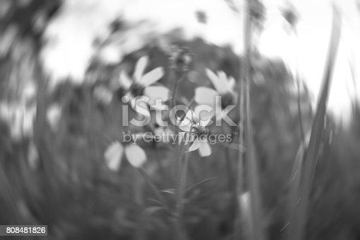 istock Blurry photo 808481826