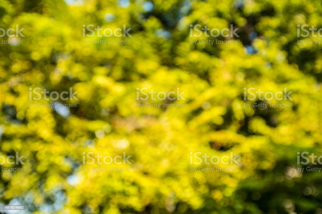 Blurry tree stock photo