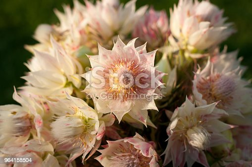 pink and white blushing bride flower bouquet in rustic clay pot on green blurred out grass in background