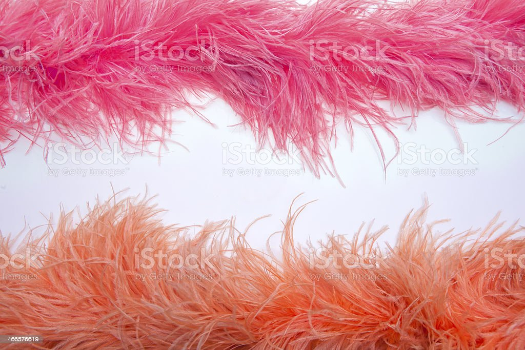 Boa ostrich feather - copy space stock photo