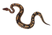 Boa Snake - hand made clipping path included