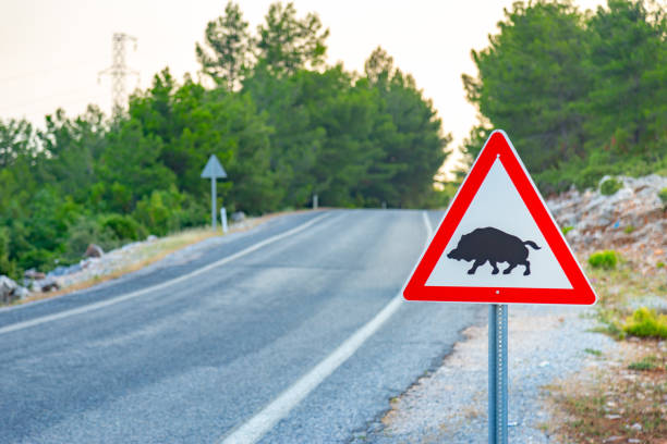 Boar crossing sign with copy space on a beautiful mountain road background. Road sign series wild boar stock pictures, royalty-free photos & images