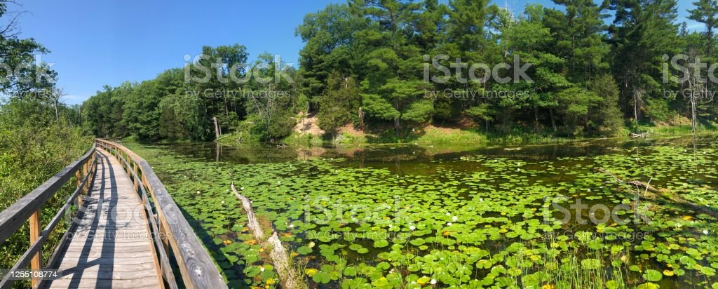 Board walk in a pond bog area in the pinery provincial park Pinery park Aerial View Stock Photo