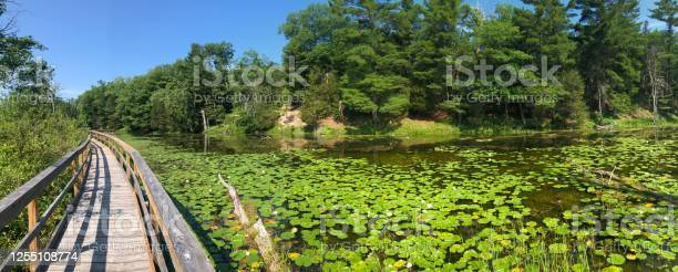 Board Walk In A Pond Bog Area In The Pinery Provincial Park Stock Photo - Download Image Now