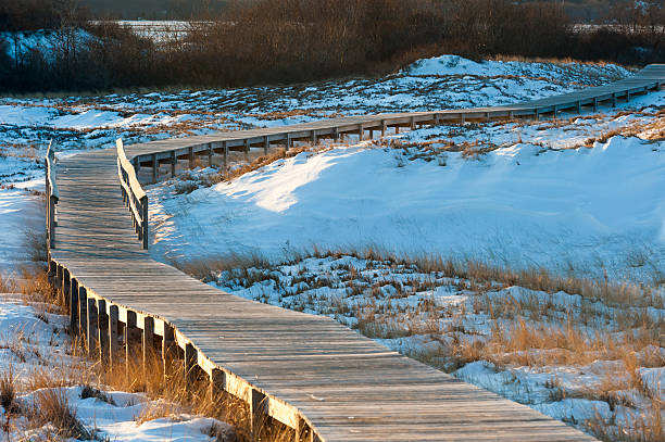 Boardwalk amid dunes Boardwalk meanders across snow-covered sand dunes amid stock pictures, royalty-free photos & images