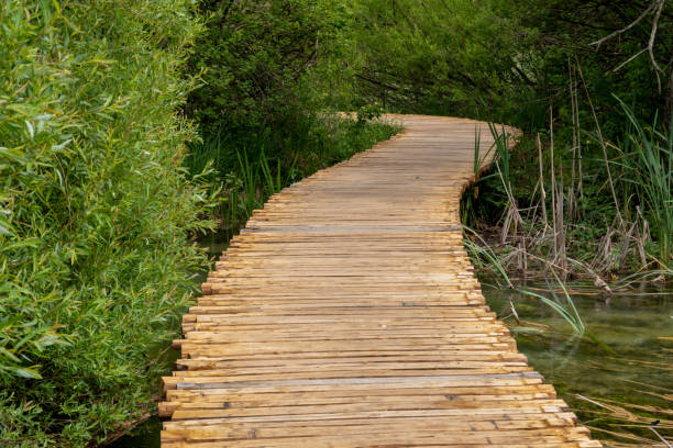 Boardwalk at Plitvice Lakes stock photo