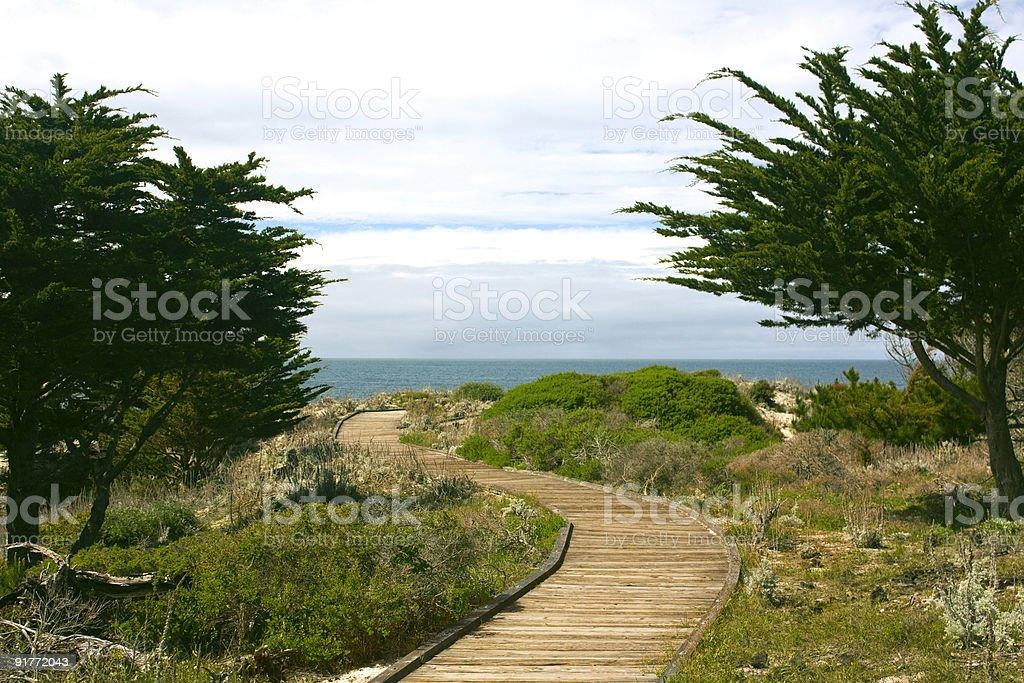Boardwalk between Monterey cypress (Cupressus macrocarpa) trees stock photo