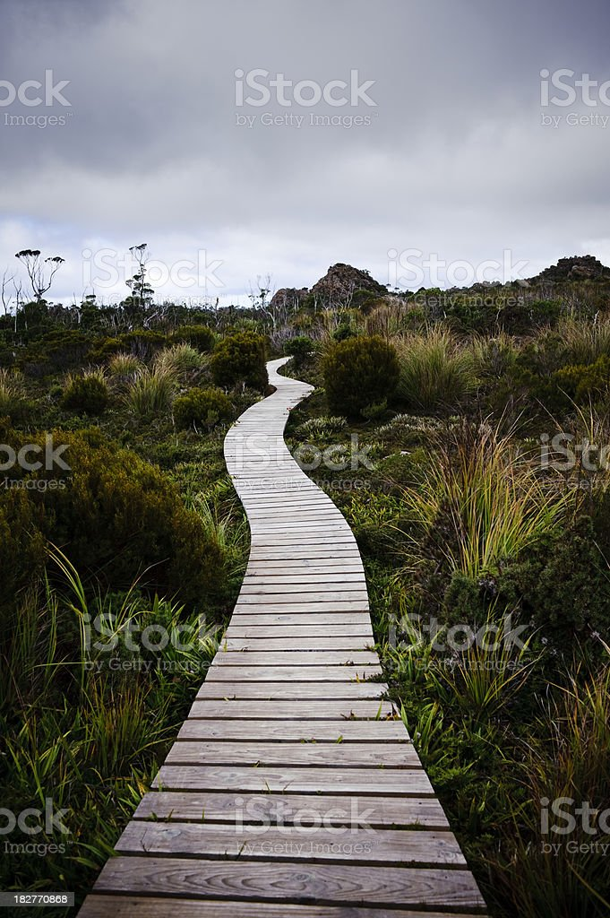 Boardwalk Conservation park wild grass tree Hartz mountains Tasmania stock photo