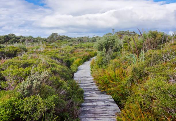 Boardwalk in beautiful wet land landscape stock photo