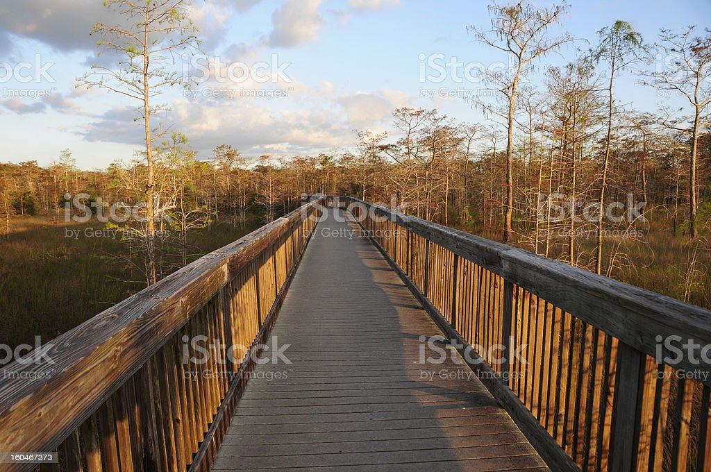 Boardwalk in Big Cypress Swamp National Preserve, Southern Florida royalty-free stock photo