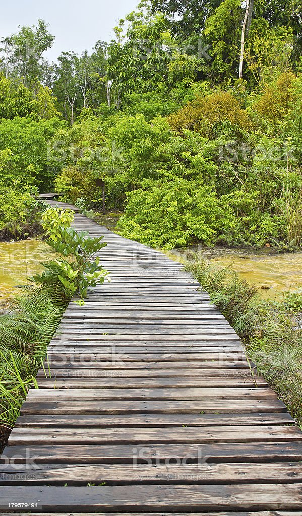boardwalk in forest tourist attraction, Thailand royalty-free stock photo