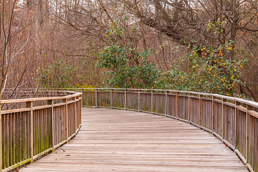 Boardwalk in Piedmont Park, Atlanta, USA