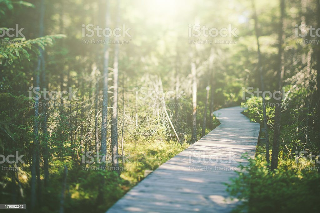 Boardwalk in the Forest royalty-free stock photo