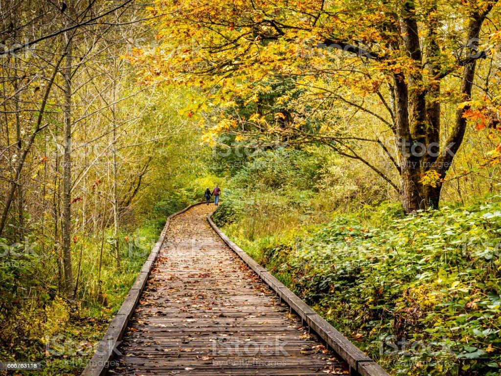 Boardwalk In The Forest foto stock royalty-free