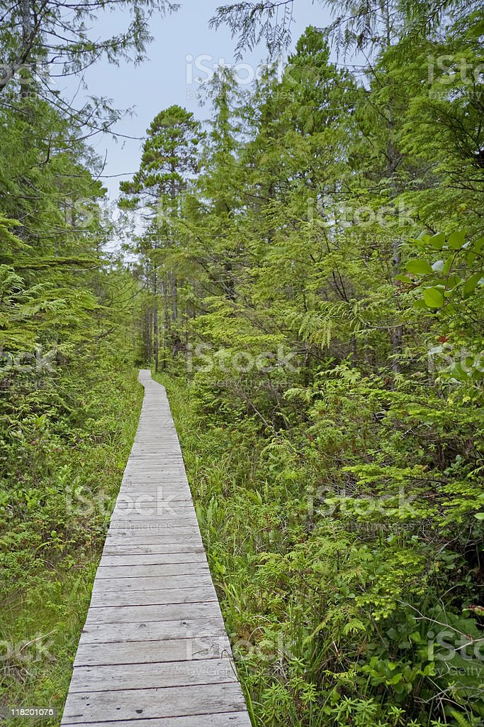 Boardwalk in the Woods stock photo
