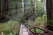 Boardwalk in Woodland