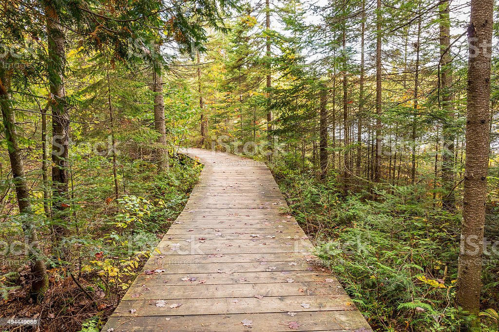 Boardwalk Leading Through a Coniferous Forest -  Ontario, Canada stock photo