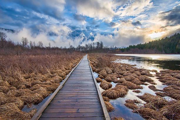 Boardwalk Leading To Forest Alongside Lake stock photo