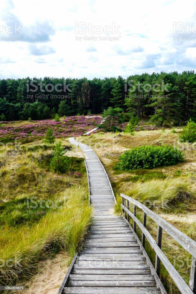 アムルム島シュレースヴィヒ ホルシュタイン州ドイツ北の海の遊歩道 ...