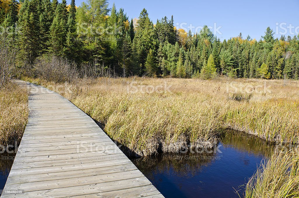 Boardwalk on Beaver Pond Trail in Algonquin Park stock photo