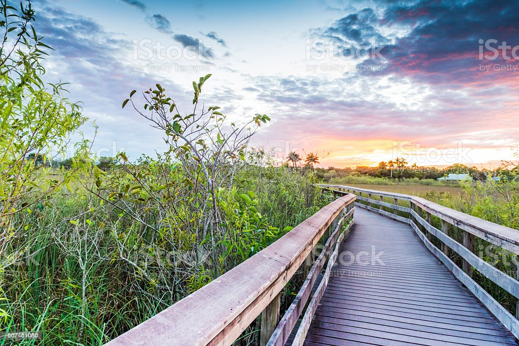 Boardwalk Path on Anihinga Trail in Everglades National Park USA stock photo