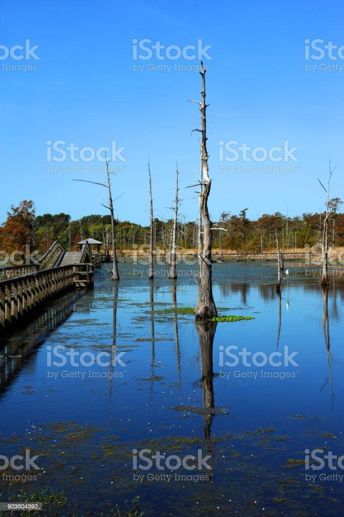 Boardwalk Stretches into Black Bayou Lake stock photo