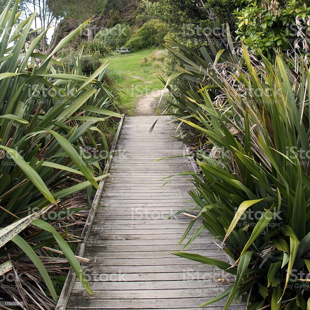 Boardwalk through Harakeke (NZ Flax) royalty-free stock photo