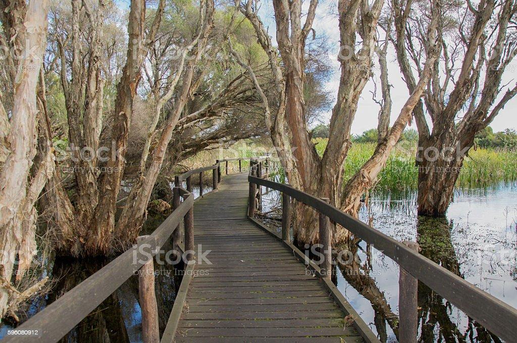 Boardwalk through Herdsman Lake royalty-free stock photo