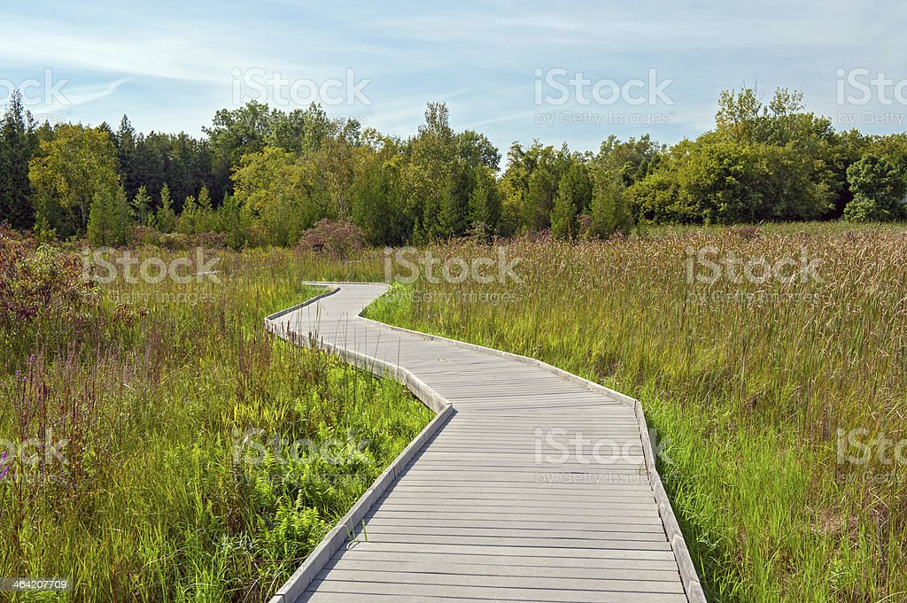 Boardwalk through Marsh stock photo