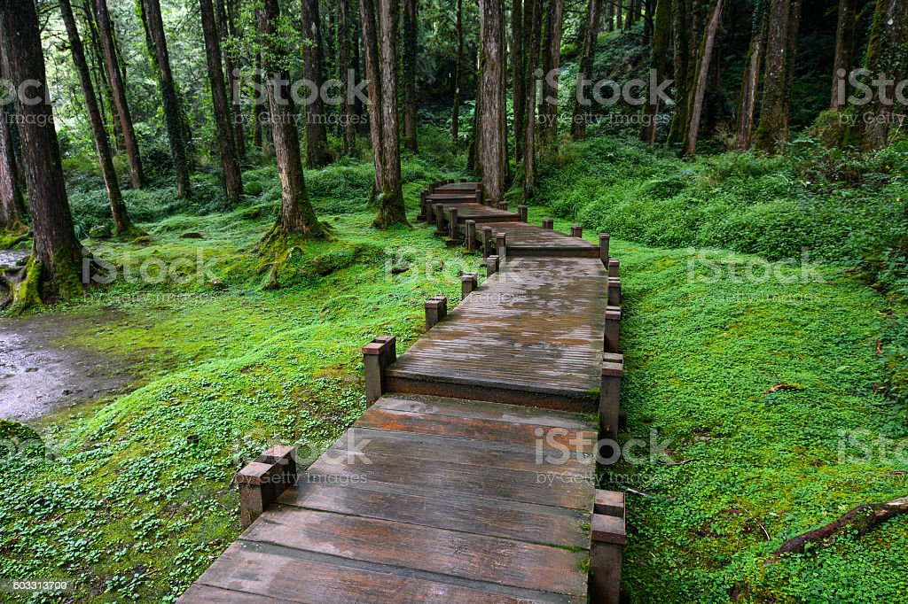 Boardwalk through peaceful forest at Alishan National Scenic Area, Taiwan stock photo