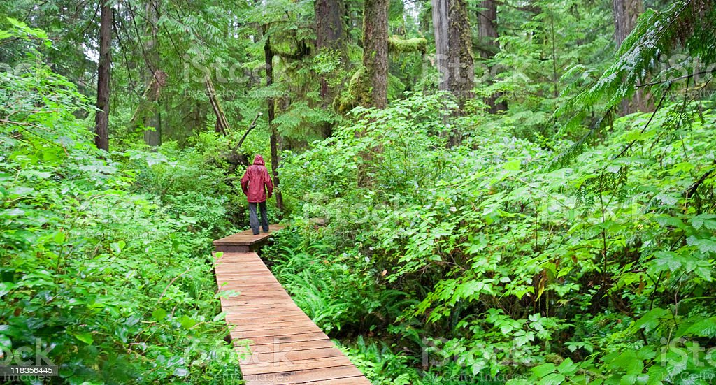 Boardwalk through Temperate Rainforest with young Woman stock photo
