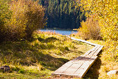 A weathered boardwalk leads through autumn foliage to the rippled water of Shea Lake in the interior of BC, Canada.