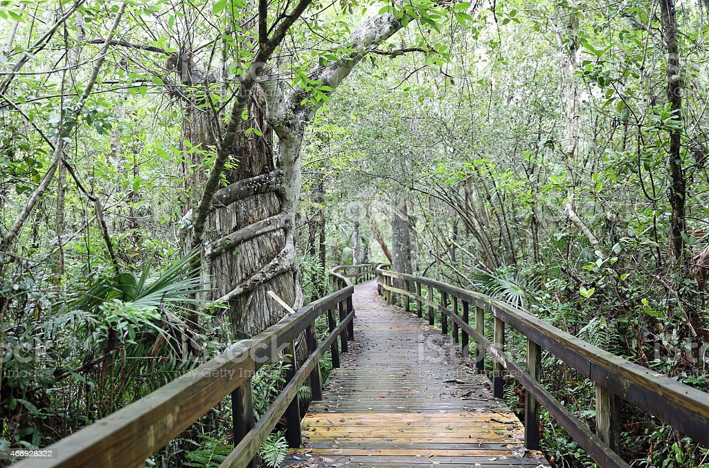 Boardwalk trail at the Everglades National Park, FL stock photo