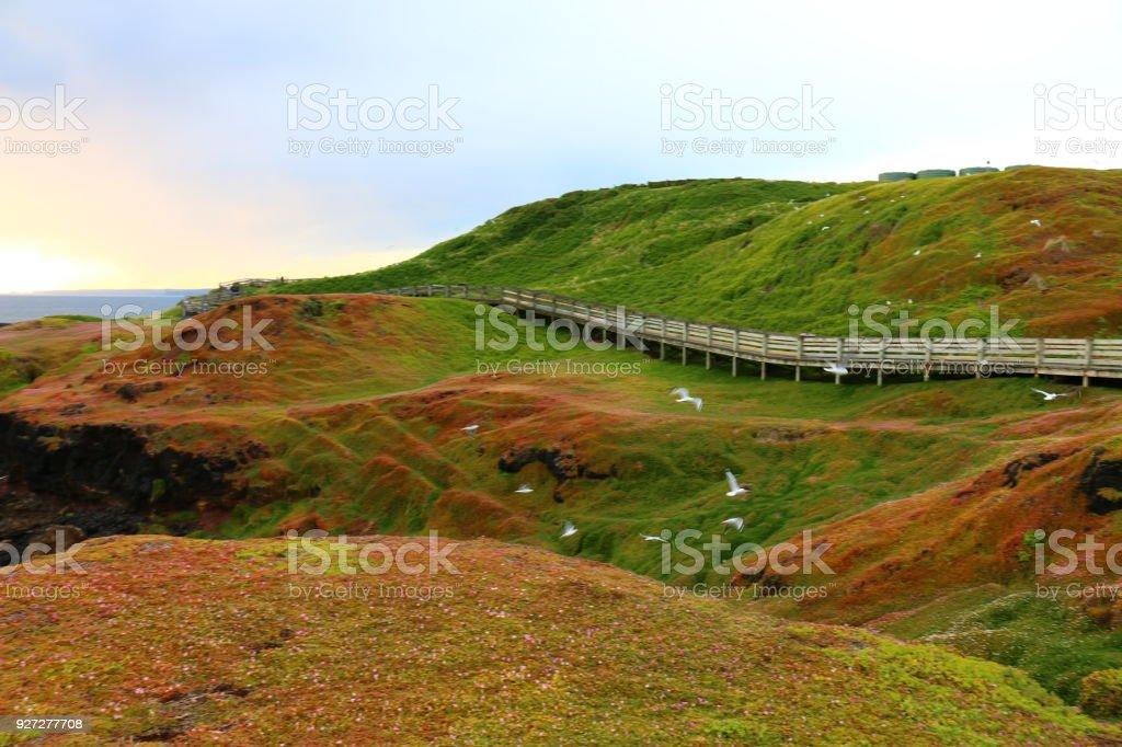 Boardwalk with beautiful scenic surrounding in phillip island Victoria, Australia stock photo