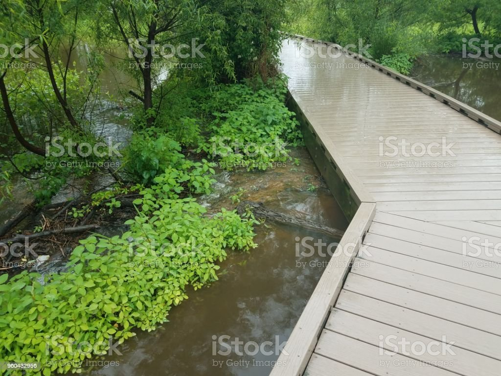 boardwalk with water and beaver dam stock photo