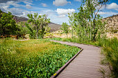 Boardwalks along Calico Basin in Red Rock Canyon National Conservation Area