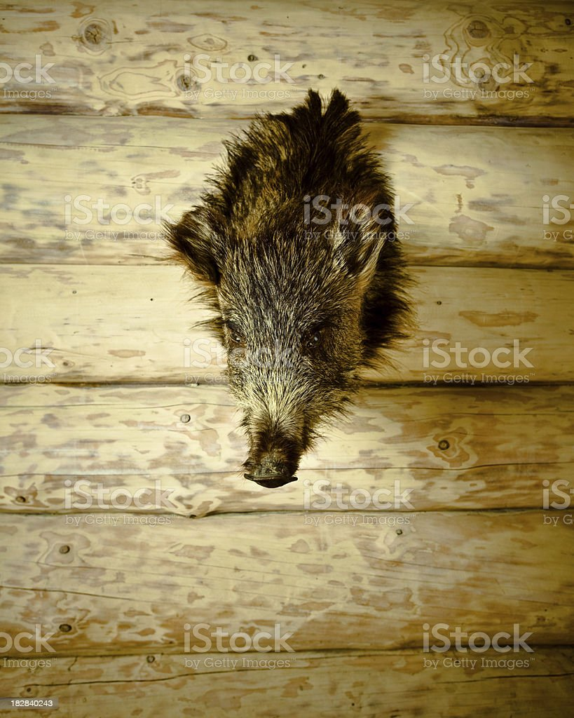 Boar's Head royalty-free stock photo