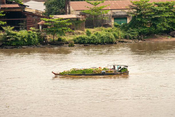 A Boat Carrying Fruit on the Mekong River in Vietnam stock photo