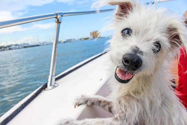 Boat Dog stock photo