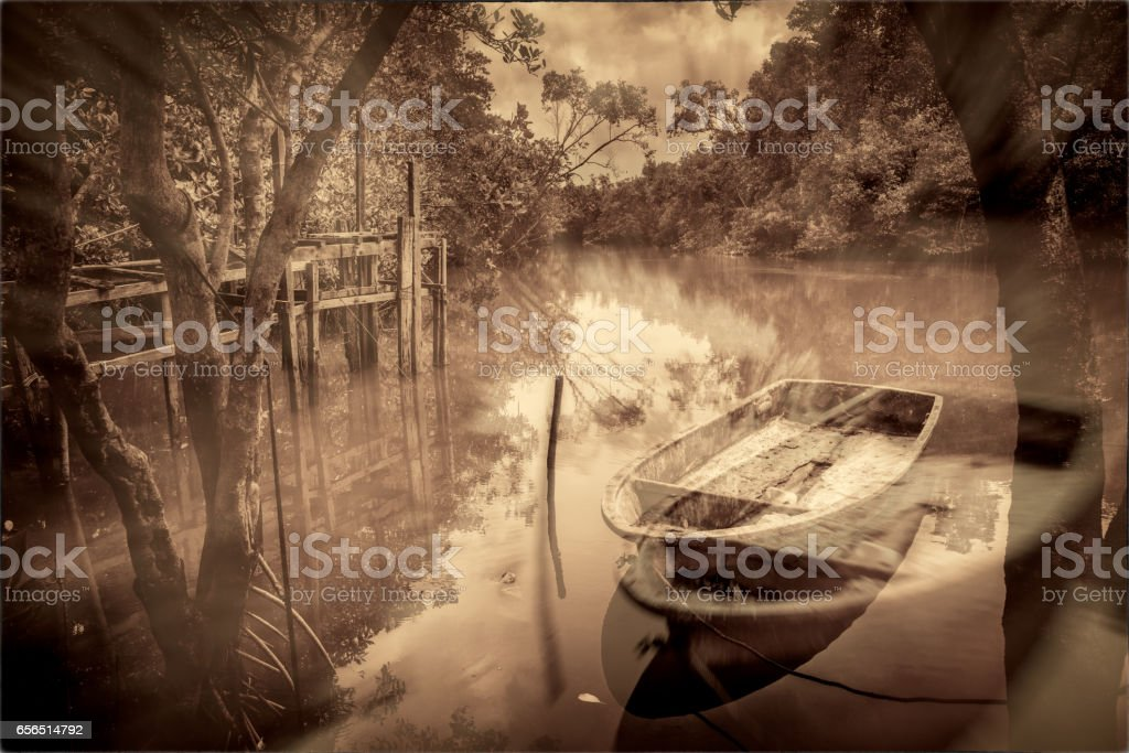 Boat in the mangrove stock photo