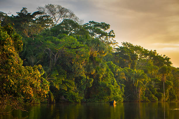 Boat in the River in the Jungle at Sunset stock photo