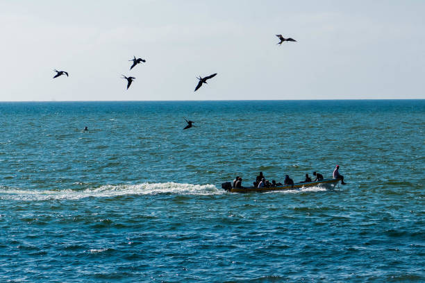 Boat in the sea with birds following stock photo