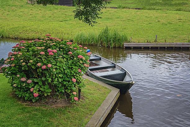 boat parked on the canal near the beautiful hydrangea bush. - rustikaler hinterhof stock-fotos und bilder
