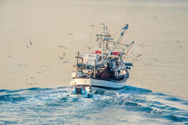 boat - uccello marino foto e immagini stock